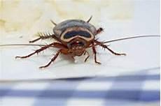 insekten in der wohnung was tun besser gesund leben