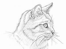 eine katze malen drawings cat and