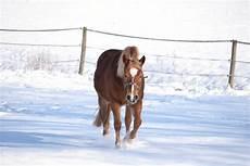 Ausmalbilder Pferde Im Winter Pferd Im Winter Foto Bild Tiere Haustiere Pferde