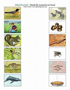 worksheets with animals and their food 14086 what do i eat matching
