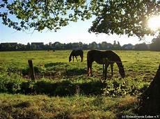 pferde wiese sieverding heimatverein lohne e v tel