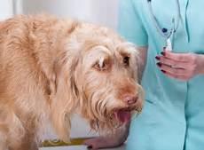 hund fieber messen so wird dein hund zum musterpatient zooroyal magazin
