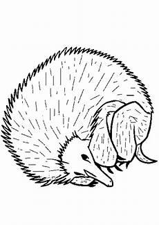Ausmalbild Igel Winterschlaf Ausmalbilder Igel 18 Ausmalbilder Tiere