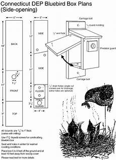 bluebird bird house plans eastern bluebird house plans eastern bluebird bryan