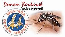 Syefrina Yuwinda Sap Demam Berdarah Dengue Dbd
