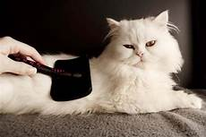 cat hair 10 ways to deal and get real with cat hair catster