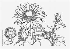 flowers letmecolor