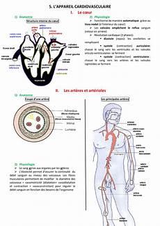appareil cardio 5 l appareil cardiovasculaire i le cœur ii les 232 res et
