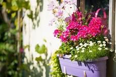 Comment Choisir Des Fleurs Pour Un Balcon En Plein Soleil