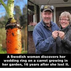 a swedish discovers wedding ring a carrot growing in garden 16 years after