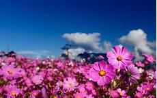 sfondi fiore flower hd wallpaper background image 1920x1200 id