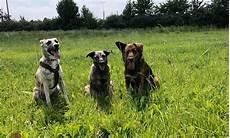 Die Beliebtesten Hunderassen Deutschlands Im Jahr 2017