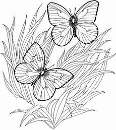 get this butterfly coloring pages to print at46f