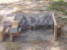 house sparrow trap plans house sparrow trap architectural designs