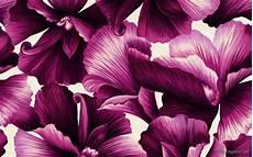 Flower Illustration Wallpaper by Hd Flower Illustrations Design Background Wallpaper Hd