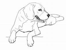 Ausmalbilder Hunde Beagle Breed Line Logo Bloodhound Stock Vector