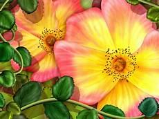 Tropical Flower Wallpaper Hd by Flowers Flowers Hd Wallpaper Unique