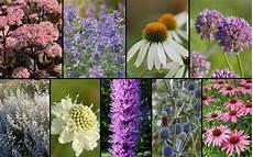 pflanzen für bienen und schmetterlinge staudenbeet quot f 252 r bienen und schmetterlinge quot zum