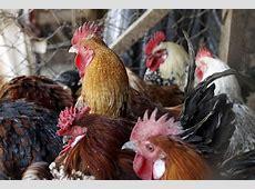bird flu info