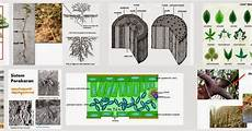 Fungsi Modifikasi Akar Jeruk fungsi modifikasi akar daun dan batang serta perbedaannya