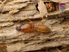 Comment Lutter Contre Les Termites Au