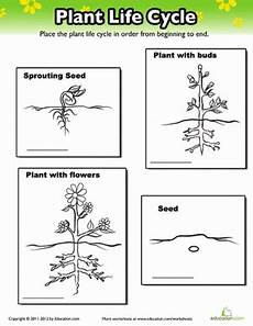 worksheets on plants cycle 13606 plant cycle worksheet education