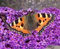 THE ANTIQUE LINEN CUPBOARD Flowers & Butterflies Linen