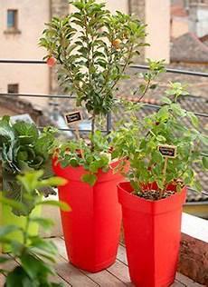 Des Arbres Fruitiers Nains Sur Mon Balcon Cultiver Des