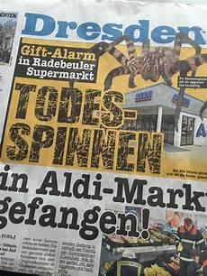 Medienpanik Spinnen Die
