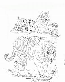 malvorlagen tiger kostenlos ausdrucken ausmalbilder zum drucken malvorlage tiger kostenlos 2