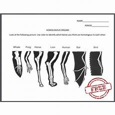 worksheet over homologous organs high school science