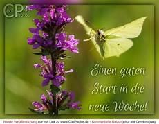 Coolphotos De Montag Einen Guten Start In Die Neue Woche