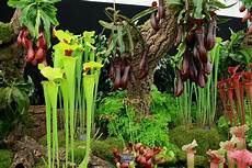 18 facts about carnivorous plants epic gardening