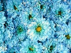 Sch 246 Ne Fr 252 Hlingsblumen Blau Kornblume Stockfoto