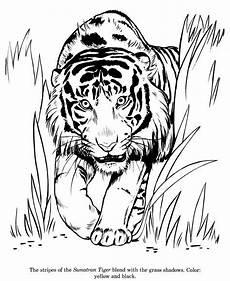 Malvorlagen Elefant Jogja Malvorlagen Tiger