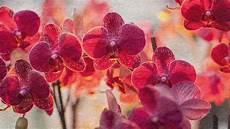 2 Top 10 Des Plus Belles Fleurs Du Monde