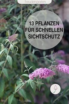 schnell wachsende sträucher schnell wachsende pflanzen schnell wachsende pflanzen