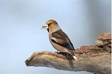 einheimische vögel im winter naturelife international