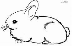 bunny coloring pages to and print for free