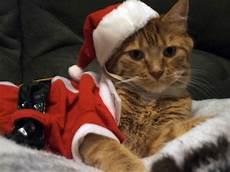 christmas cat christmas cuties pet halloween costumes merry christmas cat cute animals