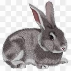Kelinci Unduh Gratis Kelinci Paskah Kelinci Kartun