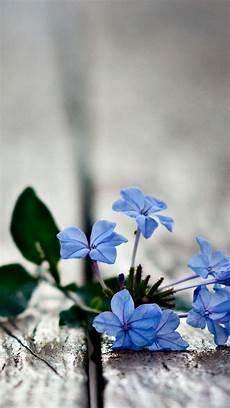 blue green flower wallpaper iphone 49 blue phone wallpaper hd on wallpapersafari