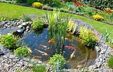 construire un bassin à poisson construire un bassin de jardin pour poissons magazine zooplus