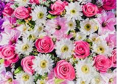 sfondo a fiori beautiful flowers background photo premium