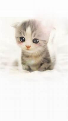 Iphone 6 Wallpaper Kittens