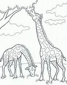 Malvorlagen Wolf Craft Giraffe Ausmalbild 09 2016 Ausmalbilder Ausmalbilder