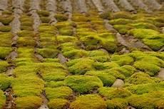 mousse sur le toit le toit d ardoise est couvert de la mousse verte image stock image du horizontal personne