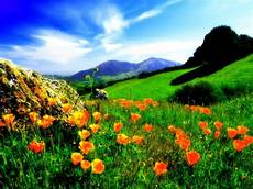 Flower Valley Wallpaper the amazing world valley of flowers national park the