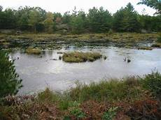 ponds and marshes