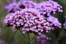blumen klein amboise daily photo tiny purple flowers